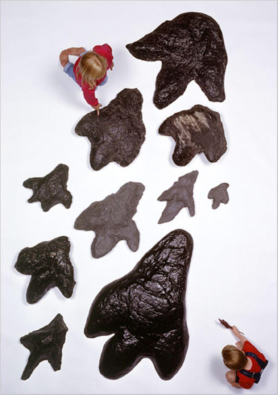 Kreationisten zweifeln nicht nur das Alter von Dinosaurierfossilien an (hier Fußabdrücke aus amerikanischen Kohleminen). Sie glauben auch, dass sie und die ersten Menschen die Erde gleichzeitig bevölkerten