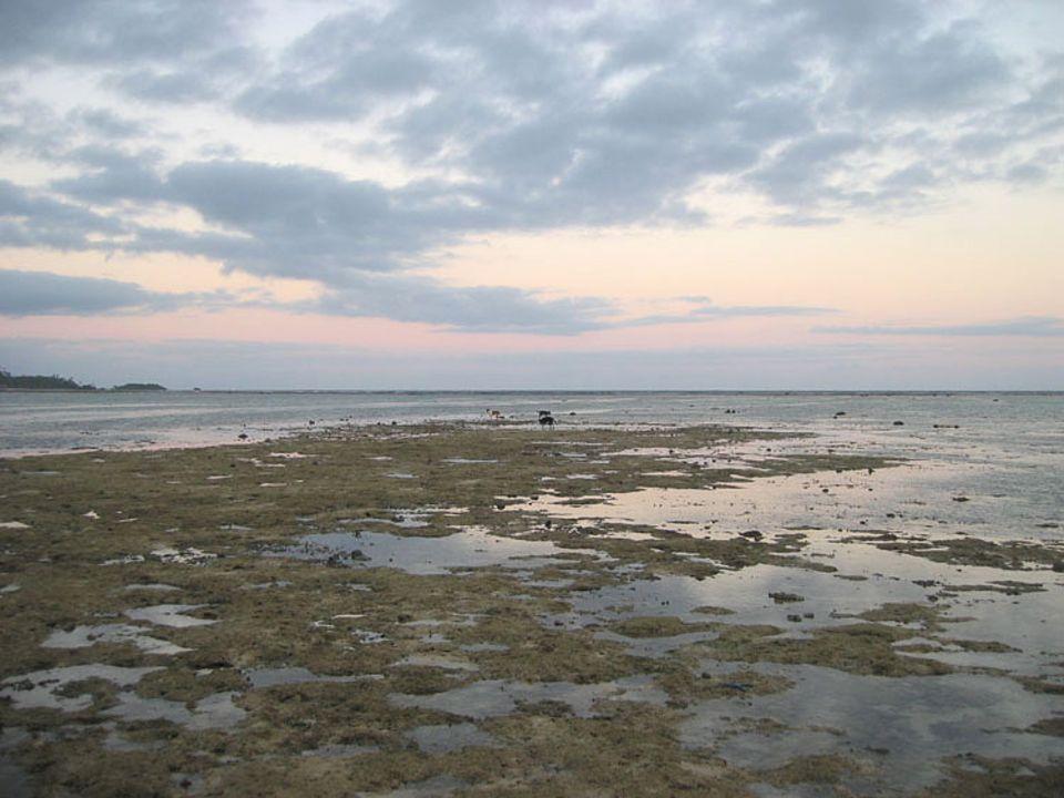 Bei Ebbe treten die ganzen Korallen zu Tage. Darauf sollte man nur mit Schuhen laufen