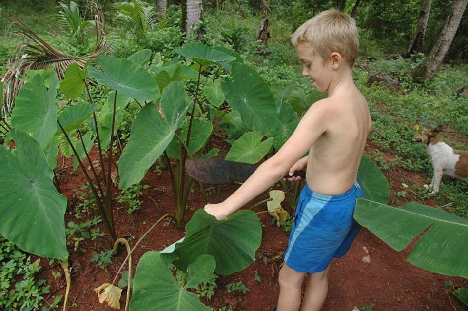 Finn ist ein begabter Gärtner, vor allem, wenn man mal mit der Machete ran muss