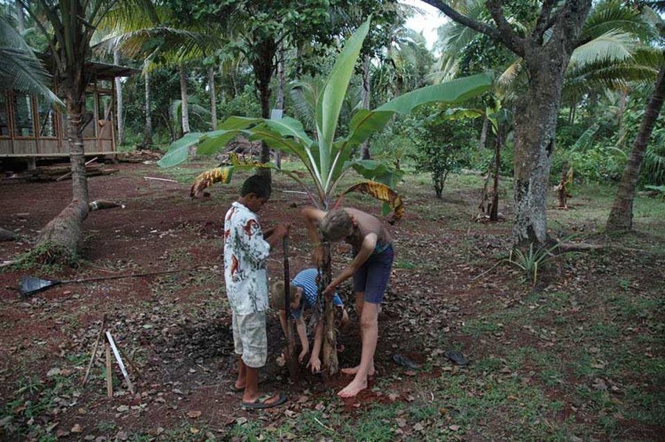 Raini, Luisa und Finn pflanzen eine Banane