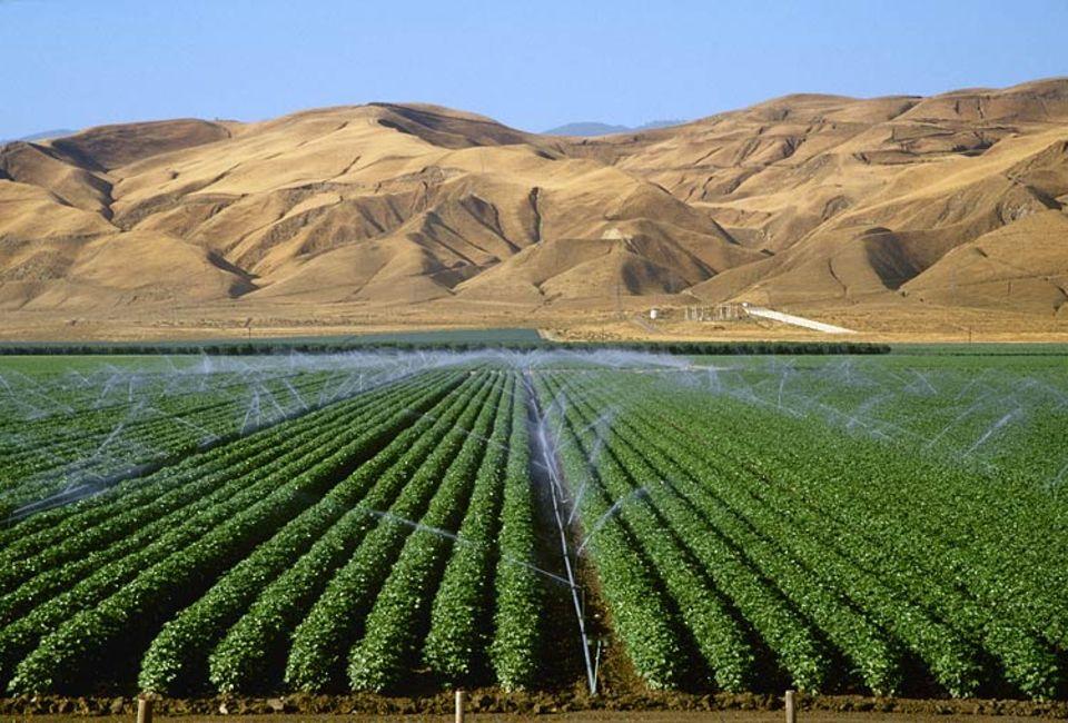 """Künstliche Bewässerung eines Baumwollfeldes. Überall dort, wo der Mensch begonnen hat, Wüsten zu """"begrünen"""", kämpft er heute gegen Bodenversalzung und Austrocknung."""