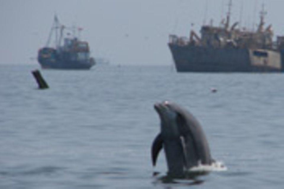 Peru: Delfine in Gefahr