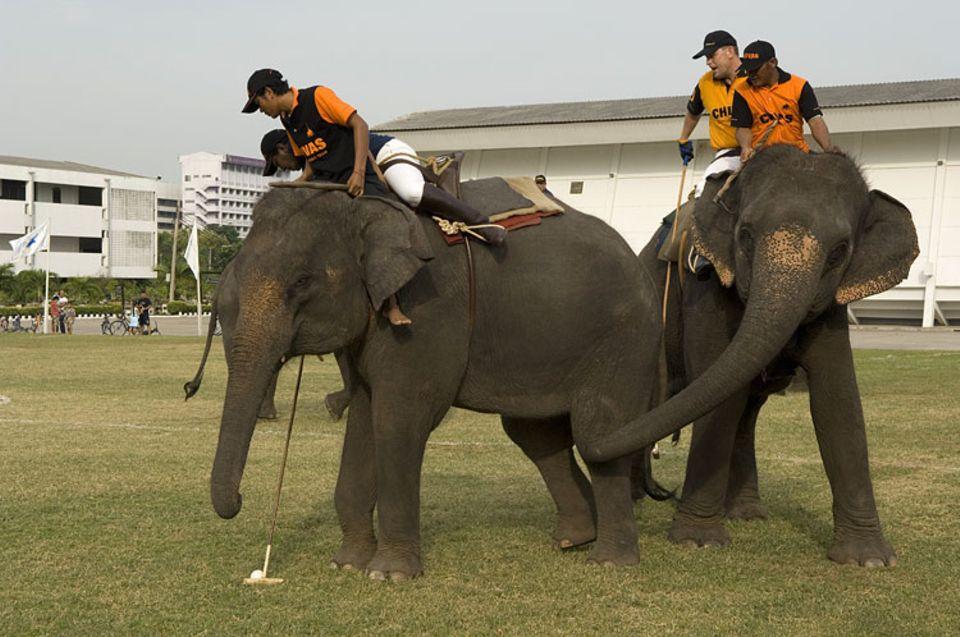 Sport: Elefantenpolo: Ein Trainingsspiel in Thailand