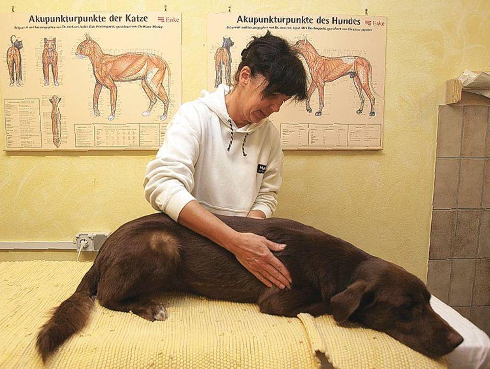 Entspannung nach der Abfahrt: Streicheleinheiten bei Tierärztin Beatrix