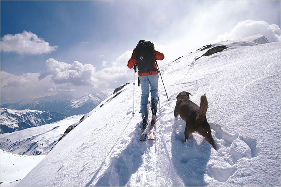 Endspurt zum Gipfel des Kröndlhorn: Der Mensch sucht die gerade Linie, der Hund tanzt Schnörkel in den Schnee