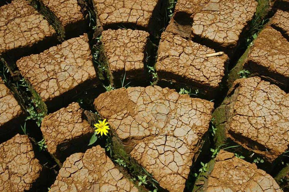 Dürre und Wassermangel - eine Folge des Klimawandels?