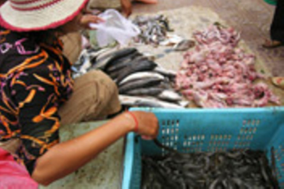 Auf Schlangenfang in Kambodscha