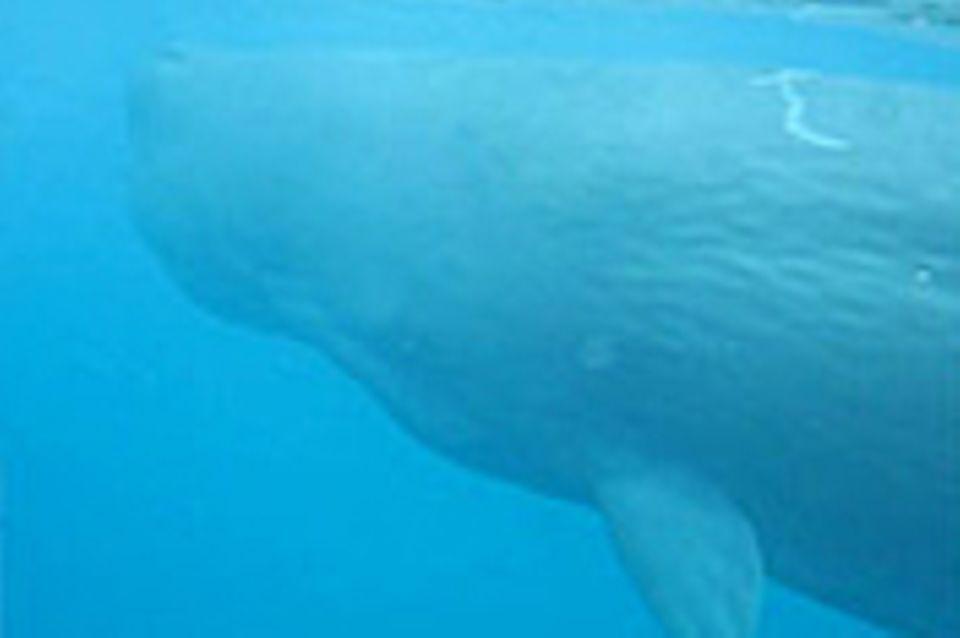 Rendezvous mit einem Wal