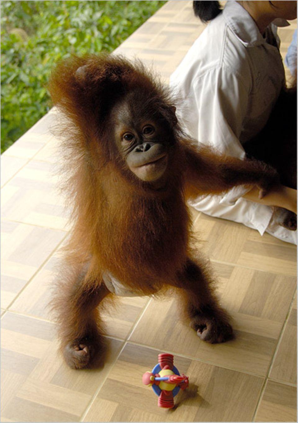 Affen: Werde ich in Freiheit aufwachsen können?