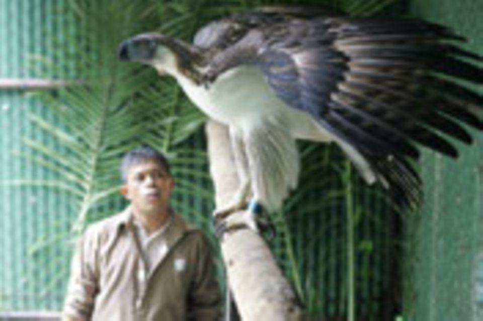 Philippinen - Rendezvous mit einem Adler