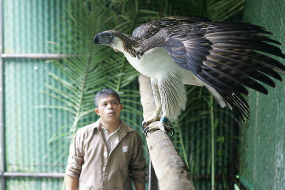Eddie Juntilla kümmert sich schon seit 14 Jahren um Adlerdame Kahayag. Bereits als Jungvogel hat er begonnen, sie auf sich zu prägen – und so haben die beiden heute eine ganz besondere, vertrauensvolle Beziehung