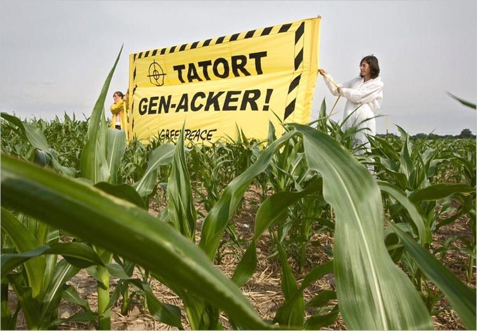 Juni 2007: Greenpeace-Aktivisten protestieren in Hohenstein bei Strausberg gegen den illegalen Anbau von Genmais