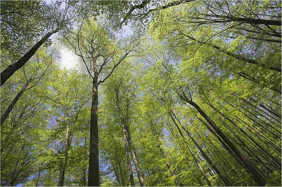 Umweltschutz: Hainich Nationalpark in Thüringen