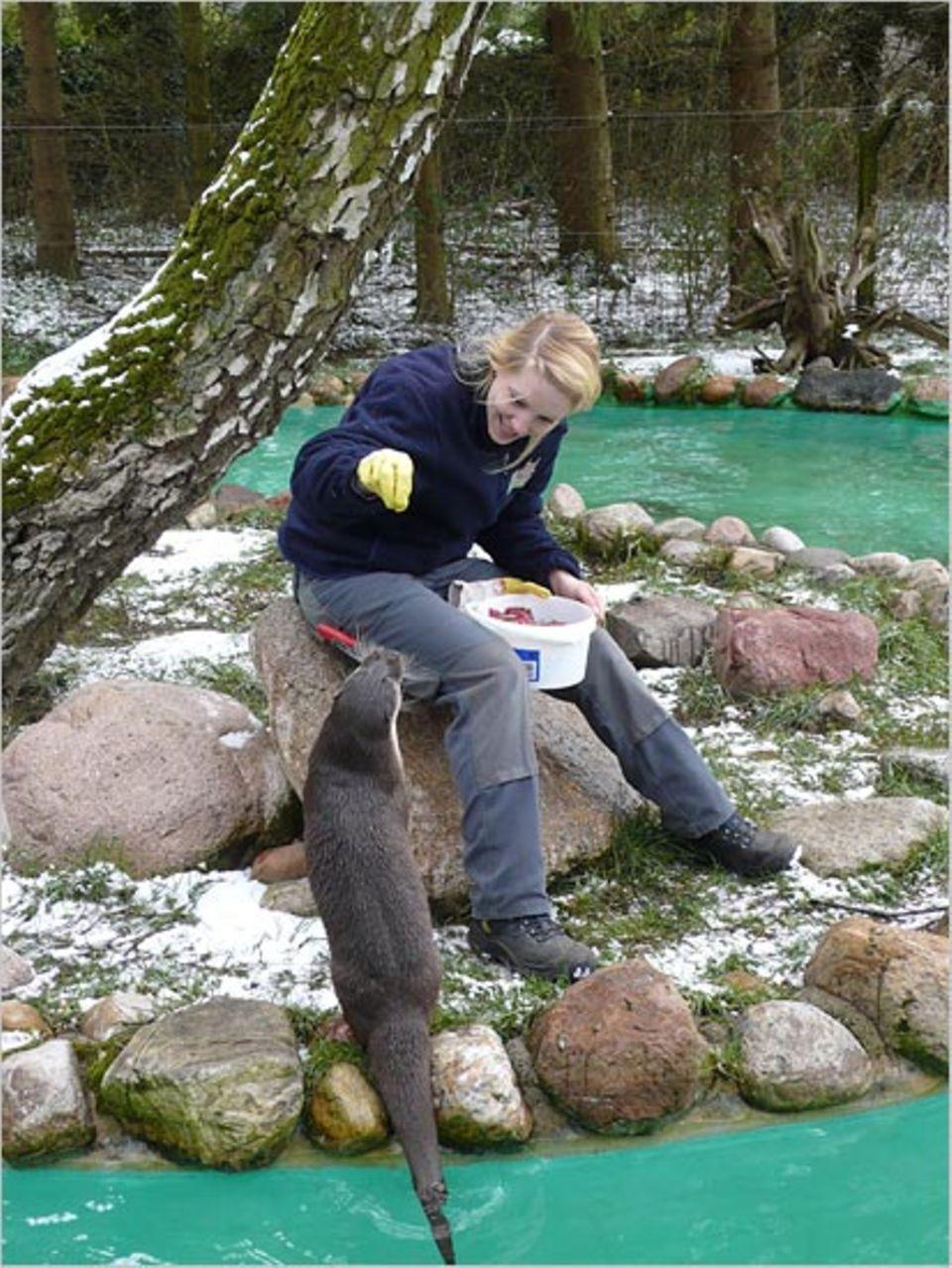 Beruf: Der Seeotter hat einen guten Tag: Er frisst Hannah sogar aus der Hand