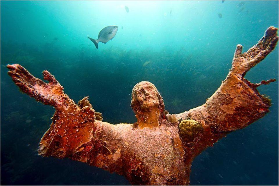 """Ökologie: Herr, lass gedeihen! Auf einer versenkten Christusstatue bei Key Largo wachsen Algen, die der Hurrikan """"Wilma"""" vom Meeresboden gerissen hat"""
