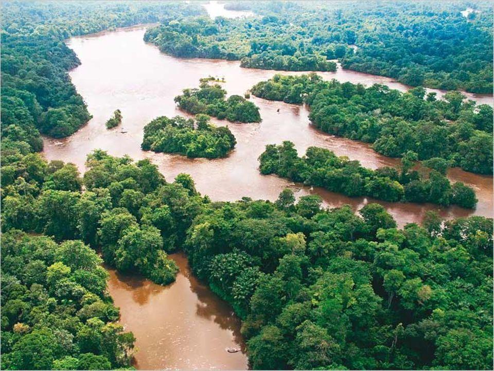 Im labyrinthischen Lauf des Marowijne River bei Drietabbetje gilt es, den Überblick zu behalten