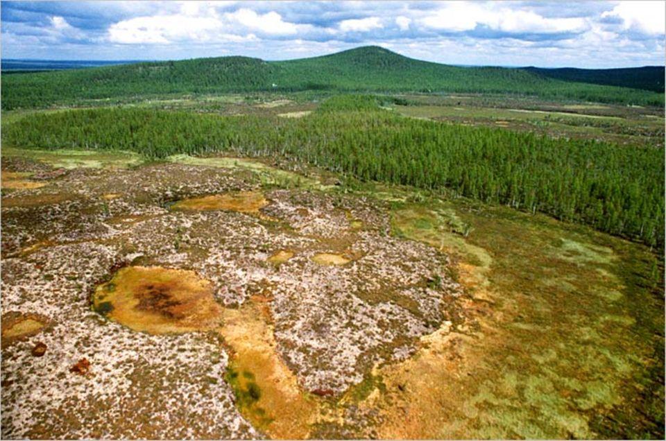 Im kalten sibirischen Klima dauert es ungewöhnlich lange, bis Baumleichen verrotten. Auf dem Bild von 1990 indes, gut 80 Jahre nach dem mysteriösen Geschehen, ist von der Katastrophe nahezu nichts mehr zu sehen