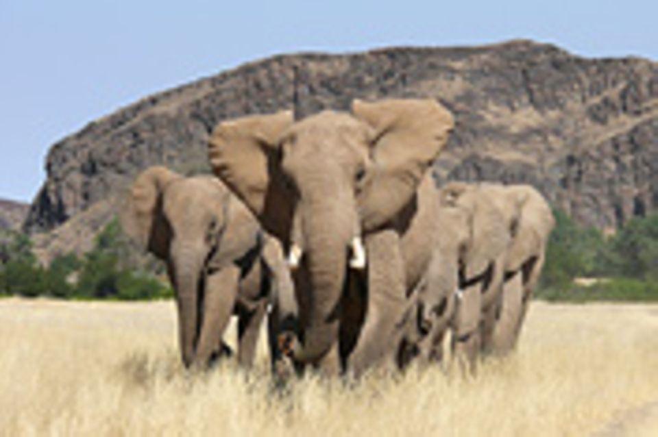 GEO.de-Safari: Wilde Tiere ganz nah