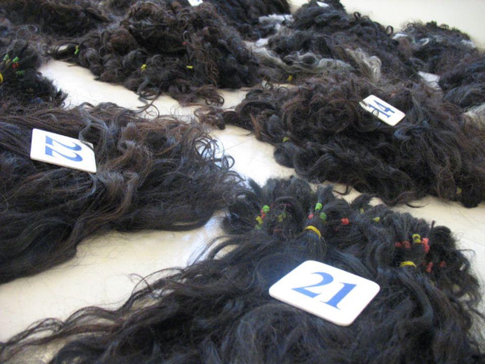 Damit die Haare nicht durcheinander geraten, wird ihre jeweilige Endlänge als Nummer auf den Stapel gelegt