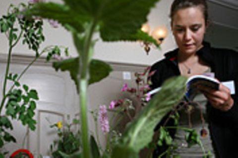 Sanfte Medizin: Pflanzenheilkunde: Die Kraft grüner Kräuter