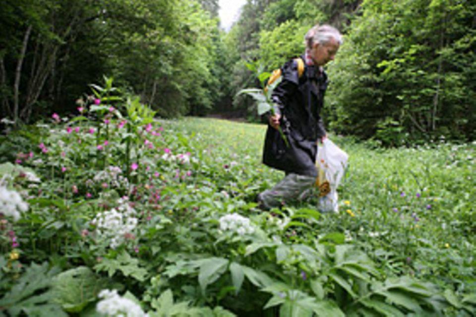 Sanfte Medizin: Querbeet durch Wald und Flur: Die Apothekerin Rita Marusic sammelt Pflanzen auf einer Bergwiese nahe Engelberg, um daraus eigenhändig Medikamente herzustellen