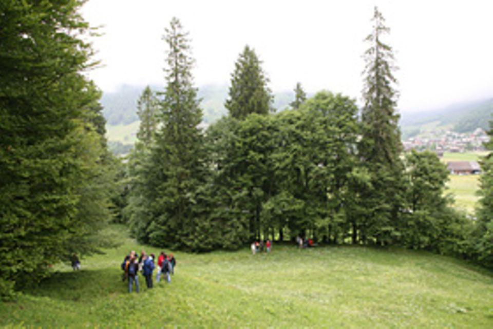Sanfte Medizin: Fündig wird die Gruppe in den Wiesen oberhalb von Egelberg