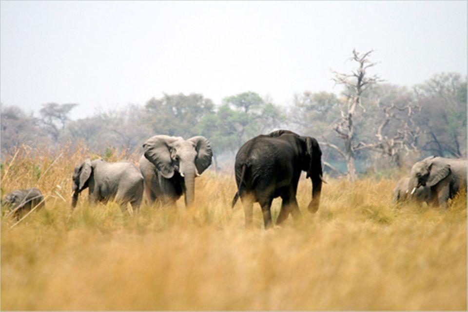 Schiebepuzzle: Nr. 16: Elefanten
