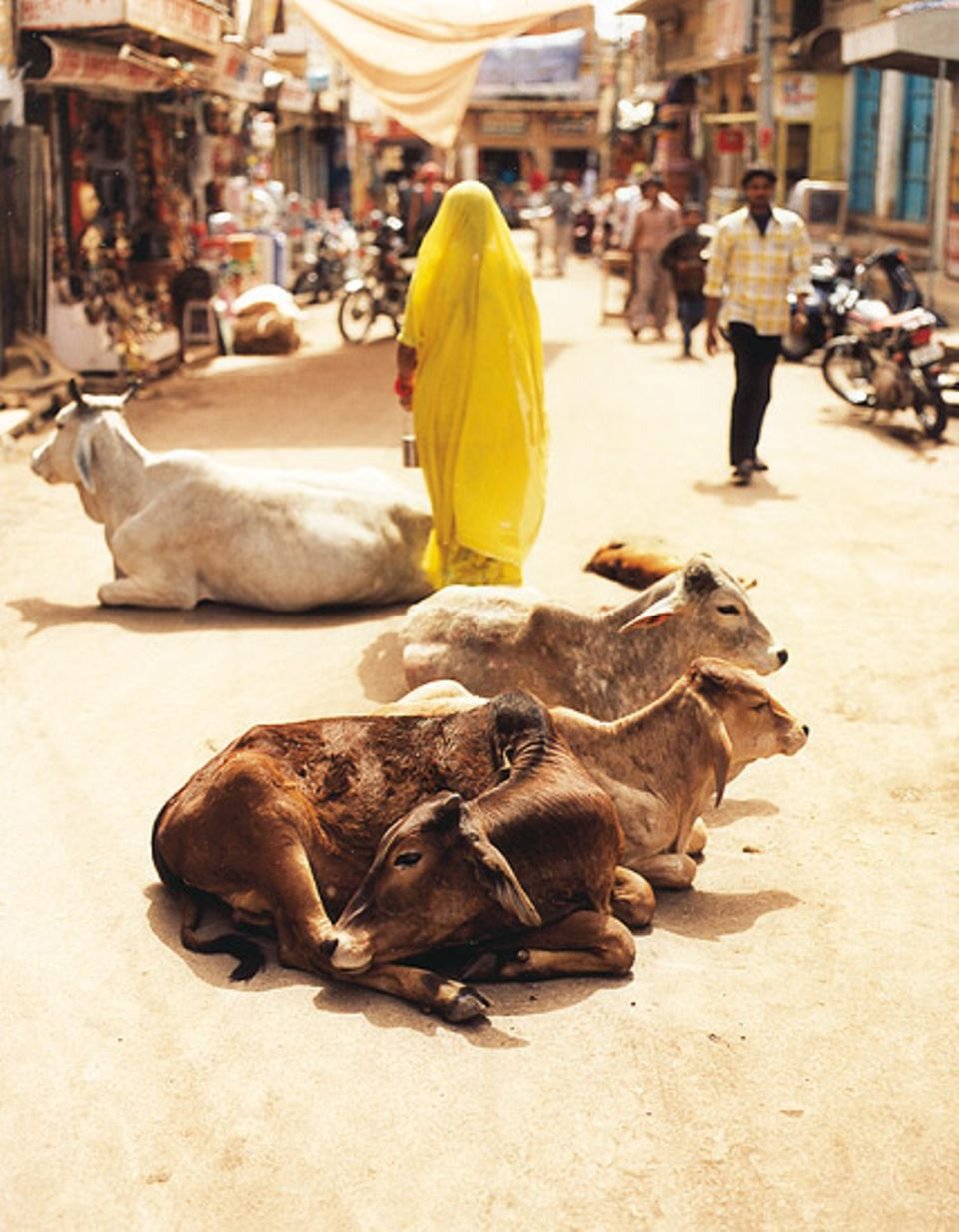 Die heilige Kuh darf in ganz Indien liegen, wo sie gerade mag