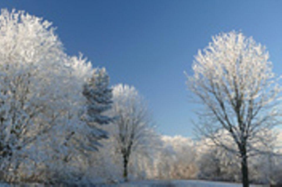 Schiebpuzzle: Nr. 22: Bäume im Winter