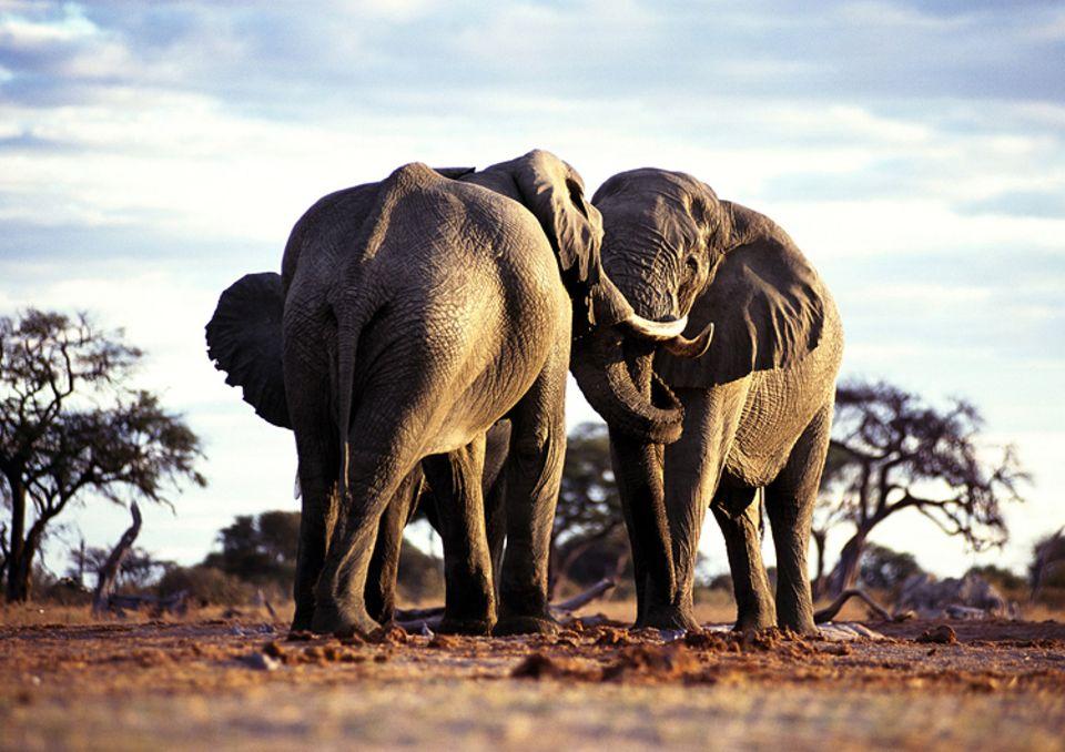 Aus einer Mücke einen Elefanten zu machen, ist oft gar nicht schwer..