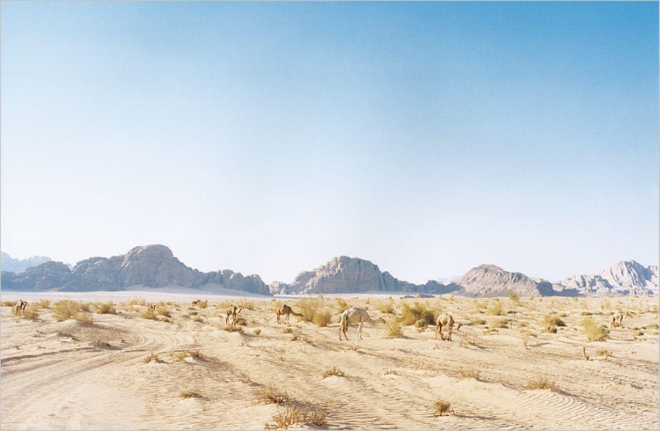 Eine Landschaft von Breitwand-Format: Vor 47 Jahren zog der Filmstar Peter O'Toole als legendärer Kriegsheld Lawrence von Arabien durch die Felsenszenerie des Wadi Rum im Süden des Landes