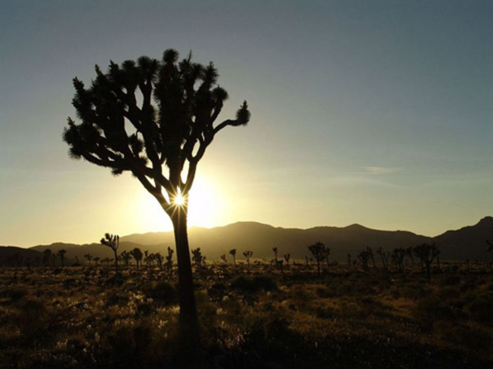 Schiebepuzzle: Nr. 46: Joshua Tree Nationalparc