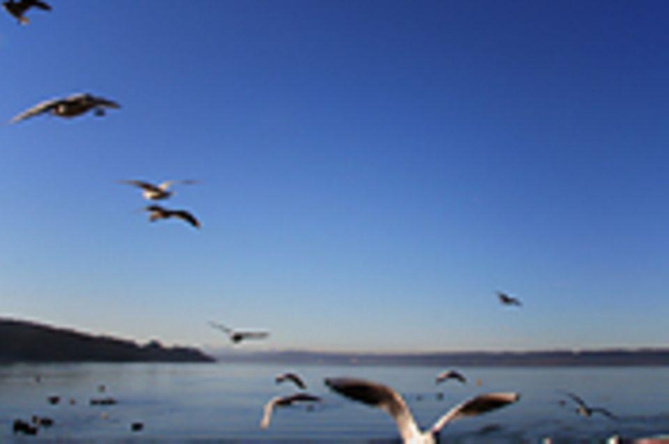 Schiebepuzzle: Nr. 58: Vögel am Ammersee