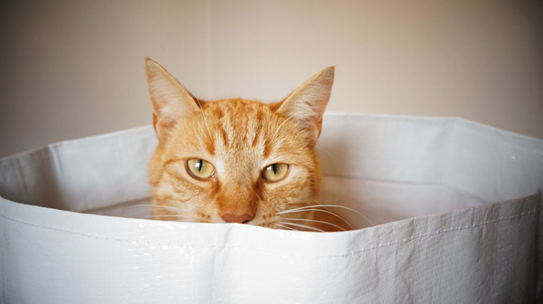 Redewendung: Die Katze im Sack