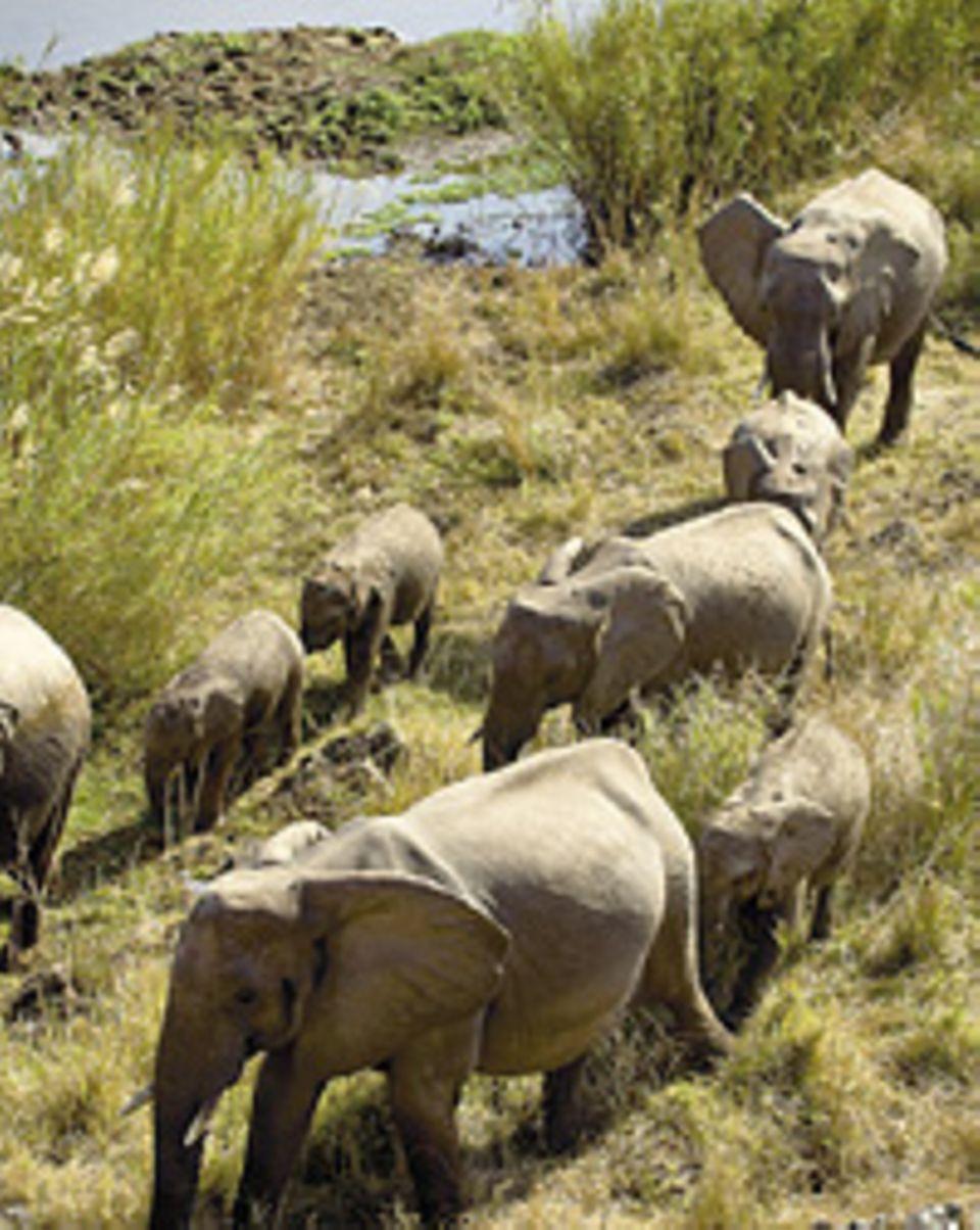 Südafrika: Fast zum Anfassen nah: Eine Elefantenfamilie zieht vorbei
