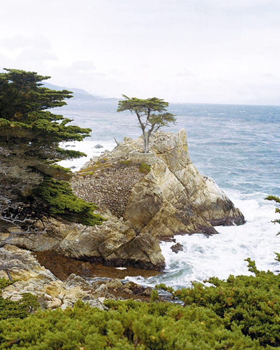 Ein Motiv für Tuschezeichner: die kleine Bucht nahe Monterey