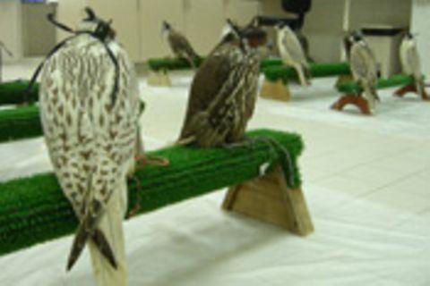 Die Falkenärztin von Abu Dhabi