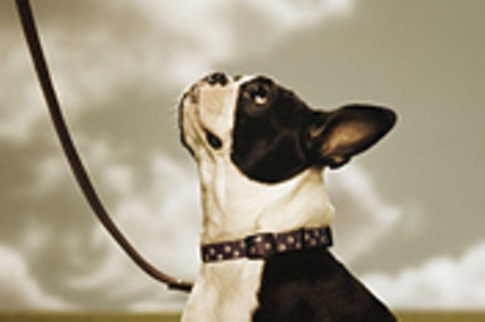 """Verhalten: Verräterischer """"Hundeblick""""?"""