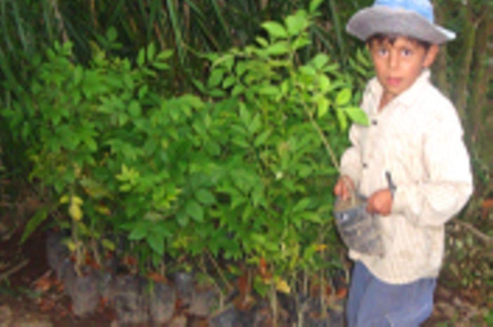 Aufforstung des Wassereinzugsgebietes von El Paraíso, Intag, Ecuador