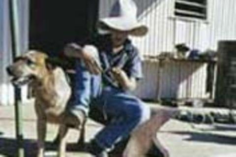 Beruf: Cowboy
