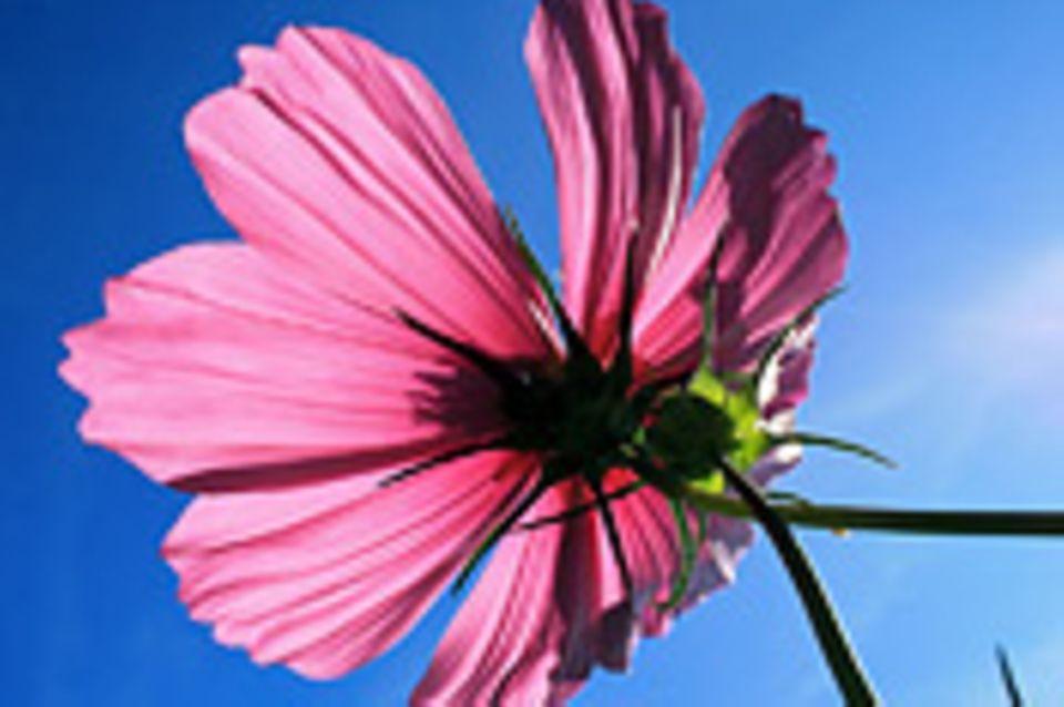 Schiebepuzzle: Nr. 125: Sommerblume