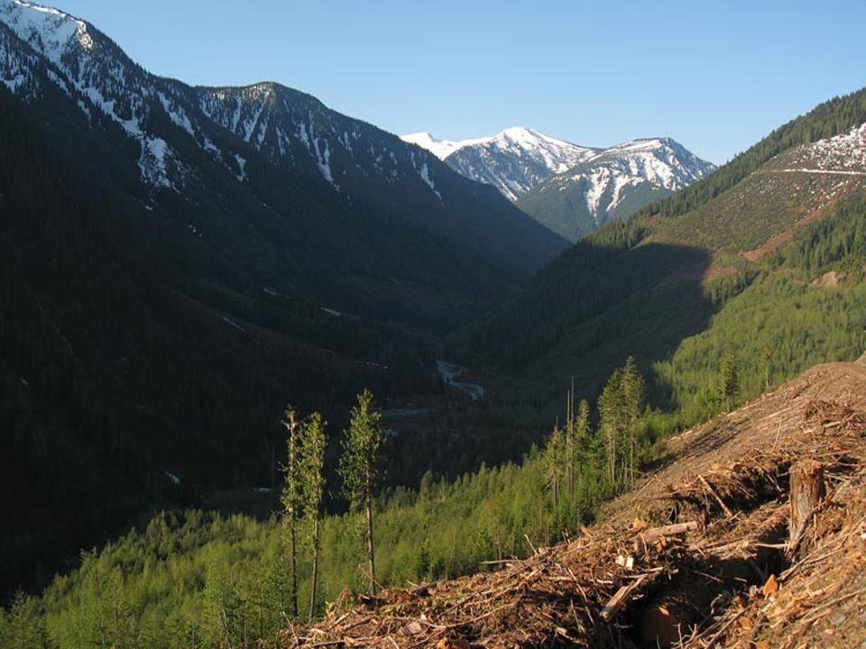 Wiederaufgeforstete Gebiete am Akokolax River in British Columbia