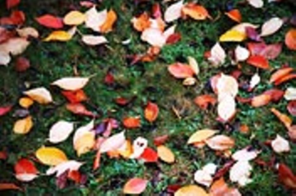 Schreibwettbewerb: Herbst