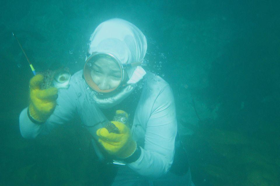Die Meerfrauen von Japan
