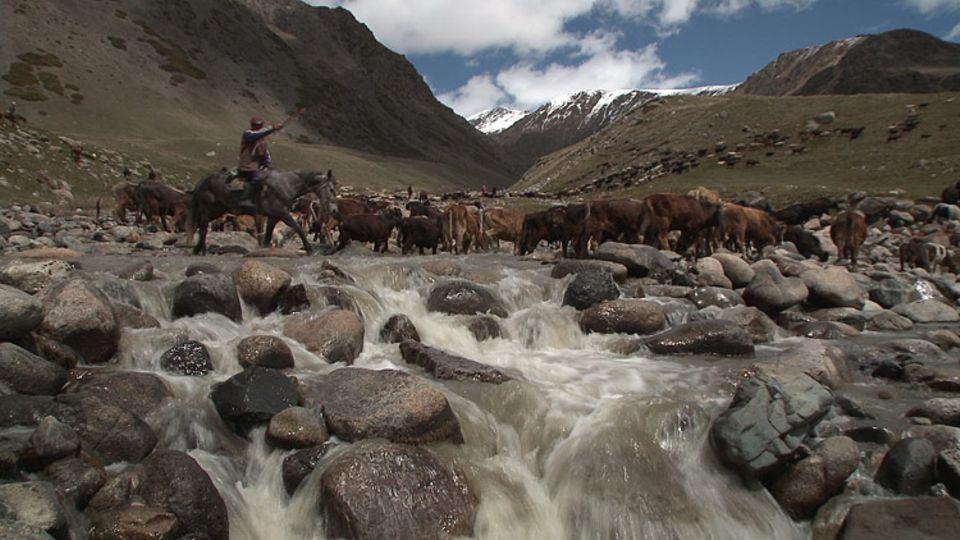 Um auf die hoch gelegenen Almen zu gelangen, muss der Hirte seine Tiere durch reißende Gebirgsflüsse treiben - jedes Mal ein Risiko für Mensch und Tier