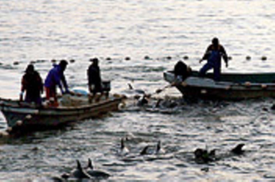 Stoppt Japan die Jagd auf Delfine?