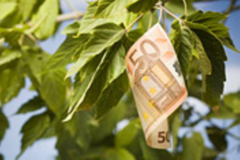 Interview: Was bringen grüne Geldanlagen?