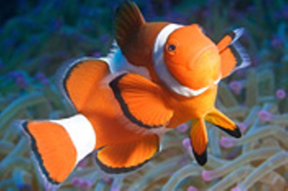 Nr. 154: Nemo