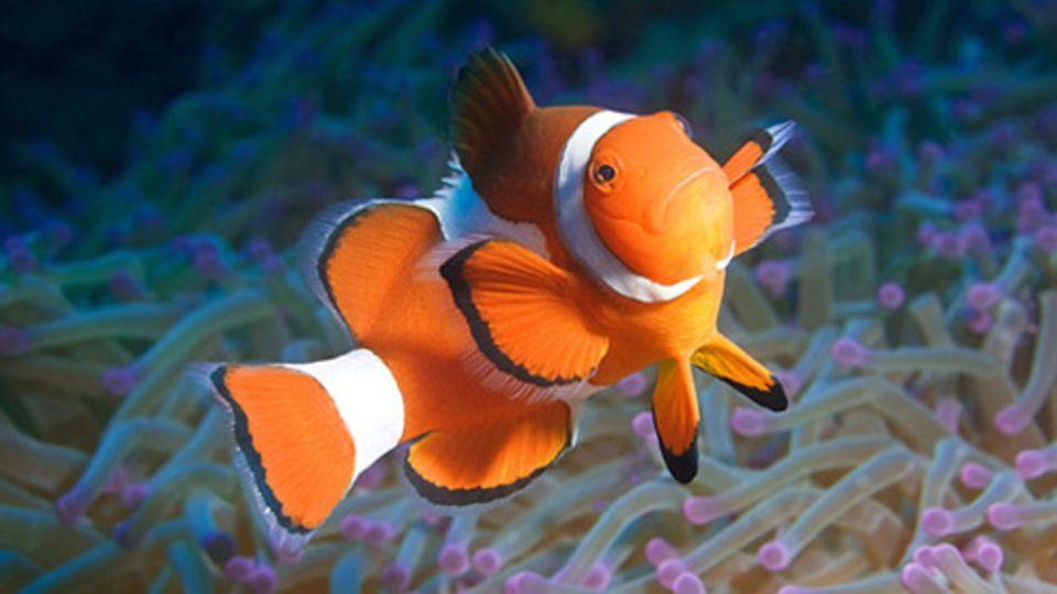Schiebepuzzle: Nr. 154: Nemo