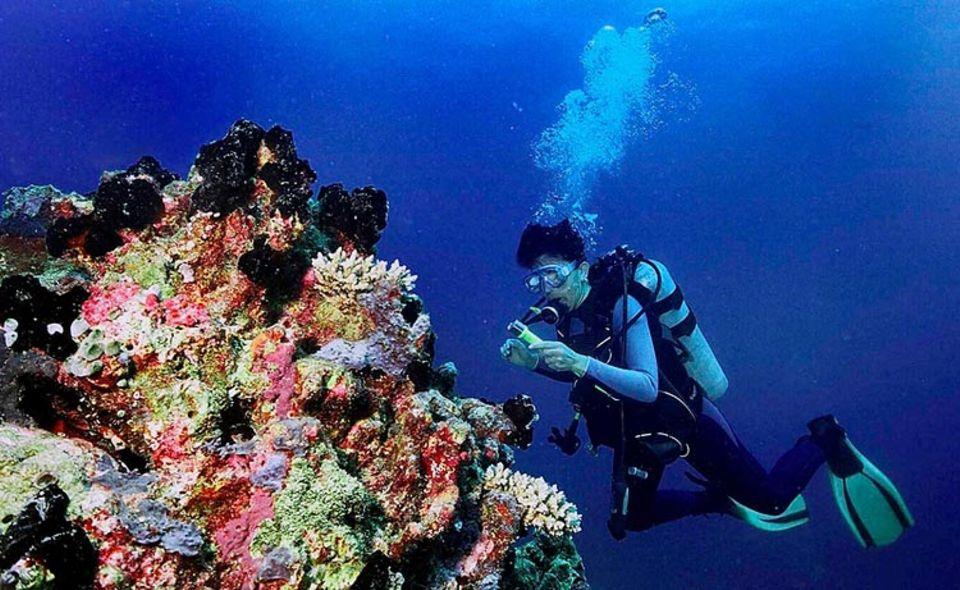 Das Grüne Gewissen: Unvorsichtige Taucher können empfindliche Korallenriffe gefährden
